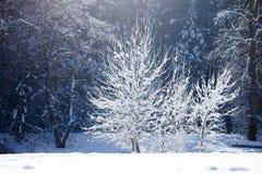 Зима Yosemite Стоковое Фото