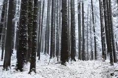 Зимнее время внутри леса на туманный день Стоковые Фотографии RF