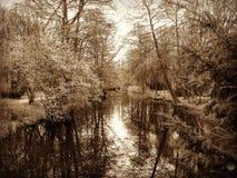 Зимнее время в парке Берлина стоковое фото rf