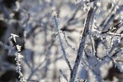 Зимнее время года Стоковая Фотография