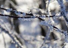 Зимнее время года Стоковое фото RF