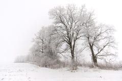 Зимнее время на полях Стоковые Изображения