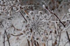Зимнее время! Стоковое Изображение RF