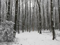 Зимние древесины Стоковые Изображения RF