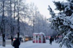 Зимние дни стоковая фотография