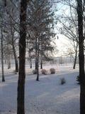 Зимние дни Стоковые Изображения