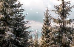 Зимние отдыхи леса рождества покрытые снег в прикарпатских горах Стоковые Фото