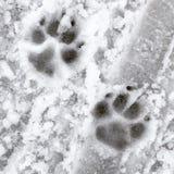 Зимние pawprints Стоковые Фотографии RF