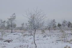 Зимний день в трясине Стоковые Изображения