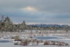 Зимний день в трясине Стоковое Изображение