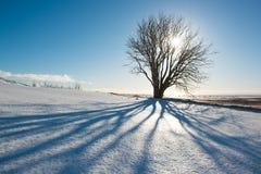 Зимний день, дерево с тенью и солнце, Исландия Стоковая Фотография RF