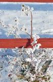 Зимний куст роз Стоковые Фото