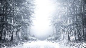 Зимняя сельская дорога Стоковая Фотография