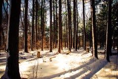 Зимняя сцена в Бостоне Массачусетсе Стоковые Изображения