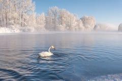 Зимовка заморозка тумана озера лебед Стоковое фото RF