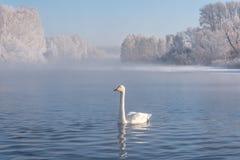 Зимовка заморозка тумана озера лебед Стоковое Изображение RF