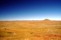злаковики Аризоны Стоковые Фотографии RF