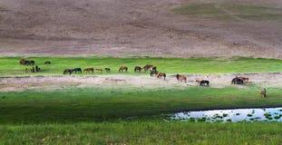 Злаковик в Иннер Монголиа Стоковое Изображение