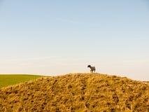 злаковик a природы ландшафта крепости девичьего утюга замка исконный стоковое изображение