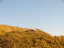 злаковик a природы ландшафта крепости девичьего утюга замка исконный стоковая фотография rf