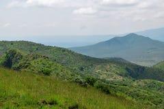Злаковик саванны на держателе оле Sekut в горной цепи Oloroka, Восточно-африканской зоне разломов, Кении Стоковая Фотография RF