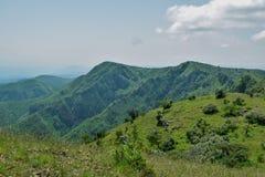 Злаковик саванны на держателе оле Sekut в горной цепи Oloroka, Восточно-африканской зоне разломов, Кении Стоковые Изображения