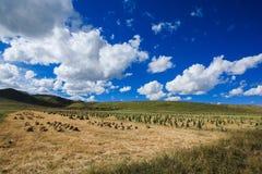 Злаковик Ruoergai, Xiahe, Gannan, Китай стоковое фото