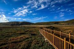 Злаковик Ruoergai, Xiahe, Gannan, Китай стоковое изображение