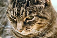 злейший глаз Стоковые Фото