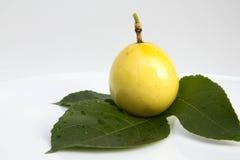 Зловонный passionflower, passionflower Scarletfruit, s Стоковые Изображения RF