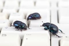 Злостая клавиатура с черепашками Стоковое Фото