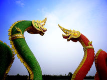 Змеи в влюбленности Стоковые Фотографии RF