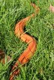 Змейка альбиноса - змейка травы - Ringelnatter на траве Стоковые Изображения