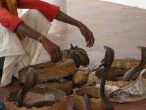 Змейка более Tamer Стоковые Фото