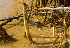 Змейка воды Стоковые Изображения