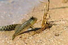 Змейка воды Стоковое Фото
