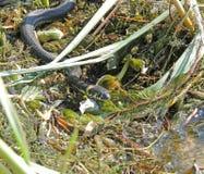 Змейка воды Стоковая Фотография