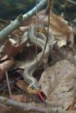 Змейка в листьях Стоковые Изображения RF