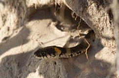 Змейка в отверстии Стоковое фото RF
