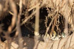 Змейка в отверстии Стоковая Фотография RF