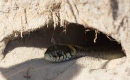 Змейка в отверстии Стоковое Изображение RF