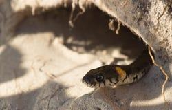 Змейка в отверстии Стоковые Фото