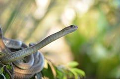 Змейка в одичалом Стоковое Изображение RF