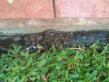 змейка в саде Стоковые Фотографии RF