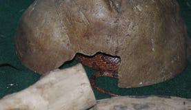 Змейка в укрытии Стоковые Изображения