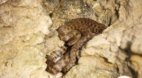 Змейка в утесах Стоковое Фото
