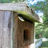 Змейка в Birdhouse Стоковое Изображение