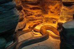 змейка греется в солнце в пещере стоковые изображения