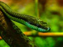 Змейка дерева Стоковое Фото