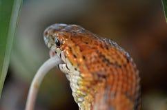 Змейка и мышь Стоковое Изображение RF
